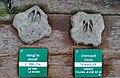 Le centre du parc national de Etsaut à mis en place un parcourt permetant de reconaitre les traces des animaux avec un affichage en braille à Etsaut vue.jpg