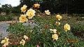 Le jardin de roses .. - panoramio.jpg