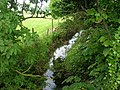 Leafy Beck near Seaton - geograph.org.uk - 1326464.jpg