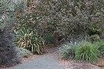 Leaning Pine Arboretum, Cal Poly.jpg
