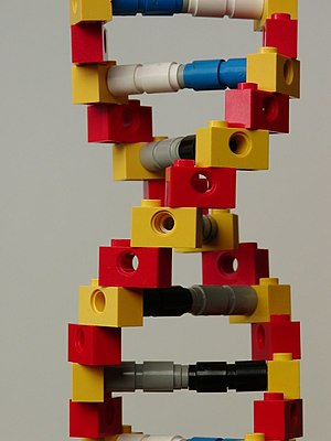 Lego DNA I made for my wife's science class