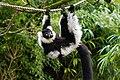 Lemur (26080755028).jpg