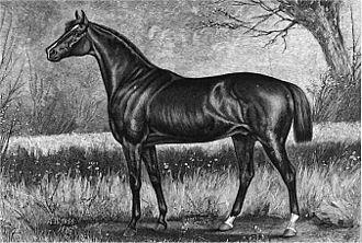1883 Kentucky Derby - 1883 Kentucky Derby winner Leonatus in an 1886 engraving by Henry H. Cross