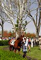 "Lexington Kentucky - Keeneland Race Track ""-2 at the Sycamore Tree"" (2144599331) (2).jpg"