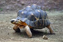 240px lightmatter tortoise