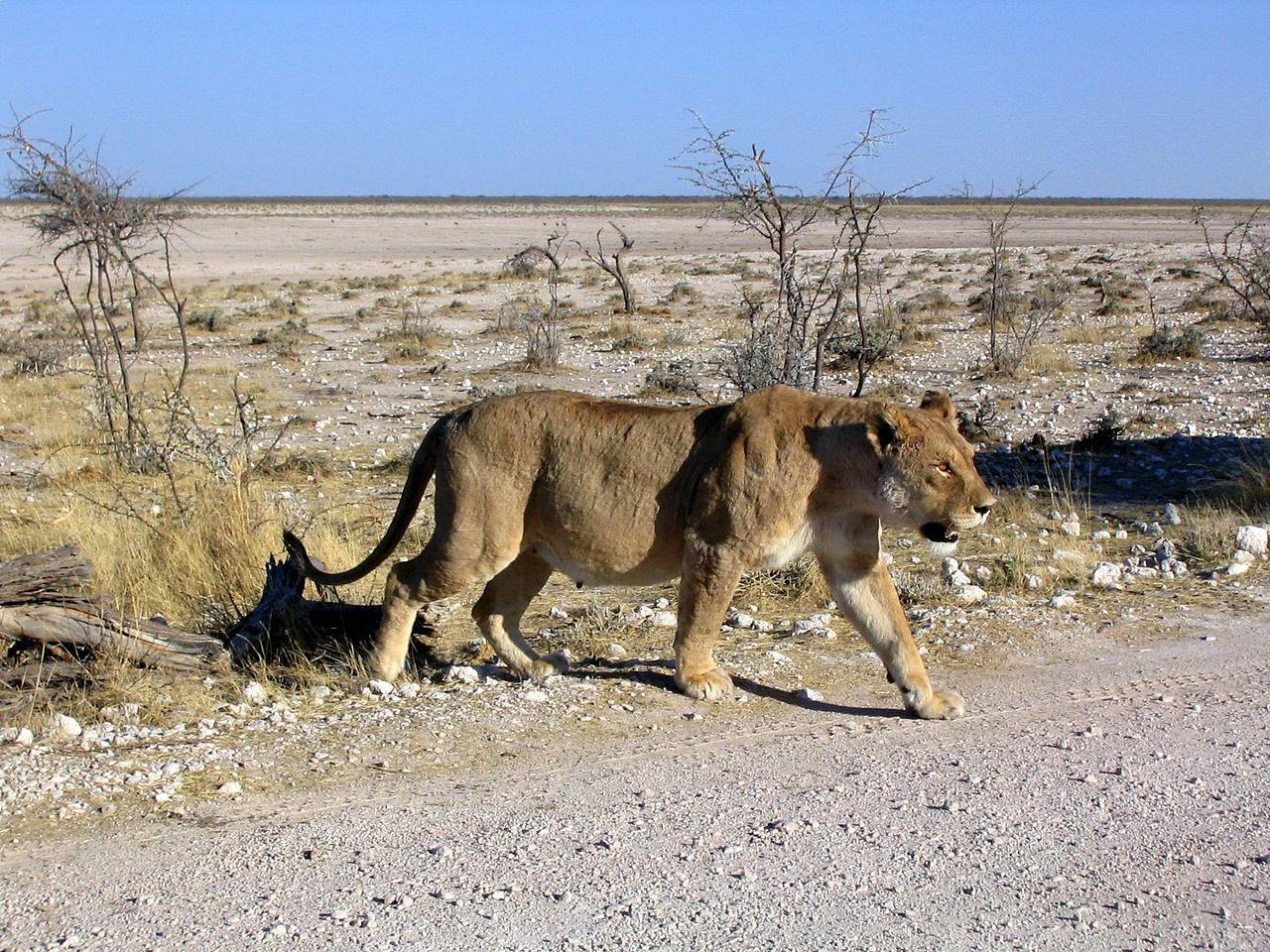 Etosha National Park, Namibia - Wildlife Photos and Tips