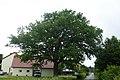 Lockhausen - ND Eiche Grenzweg 18.jpg