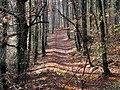 Loex, Promenade le long du Rhone - panoramio (23).jpg