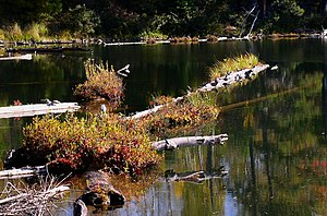 Bear Head Lake State Park - Floating logs on Cub Lake support bog plants