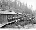 Loggers and mess hall crew at logging camp, Wynooche Timber Company, near Montesano, ca 1921 (KINSEY 1594).jpeg