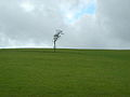 Lonely Tree on Hempland Hill - geograph.org.uk - 353596.jpg