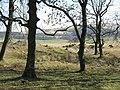 Looking through the trees near Shiplaw Burn - geograph.org.uk - 1231670.jpg