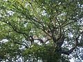 Lorto-botanico-di-padova-2016 28340423396 o 19.jpg