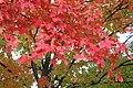 Lovely tree.JPG