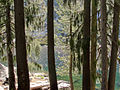 Lower Canyon Creek Lake with Picea breweriana.jpg