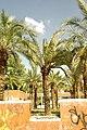 MADRID A.V.U. JARDIN-PARQUE DE PEÑUELAS PALMERAS - panoramio - Concepcion AMAT ORTA… (7).jpg