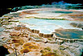 MAMMOTH HOT SPRINGS - EXTREMOPHILES.jpg