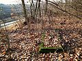 MOs810 WG 55 2016 Pyzdry Forest III (Old evangelical cemetery Zbiersk Kolonia) (3).jpg