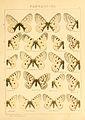 Macrolepidoptera01seitz 0029.jpg