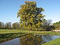 Magnificent Oak Tree in autumn colours reflected in Stowey Manor duckpond (geograph 2167882).jpg