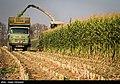 Maize Iran 22.jpg