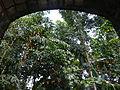 Majayjay,Lagunajf8982 01.JPG