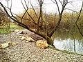 Malý park pri jazierku - panoramio.jpg