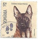 Malinois-Canis-lupus-familiaris-Footprints.jpg