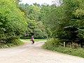 Man walking large dog, Forest of Dean - geograph.org.uk - 1511047.jpg