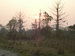 Manas Wildlife Sanctuary-118457.jpg