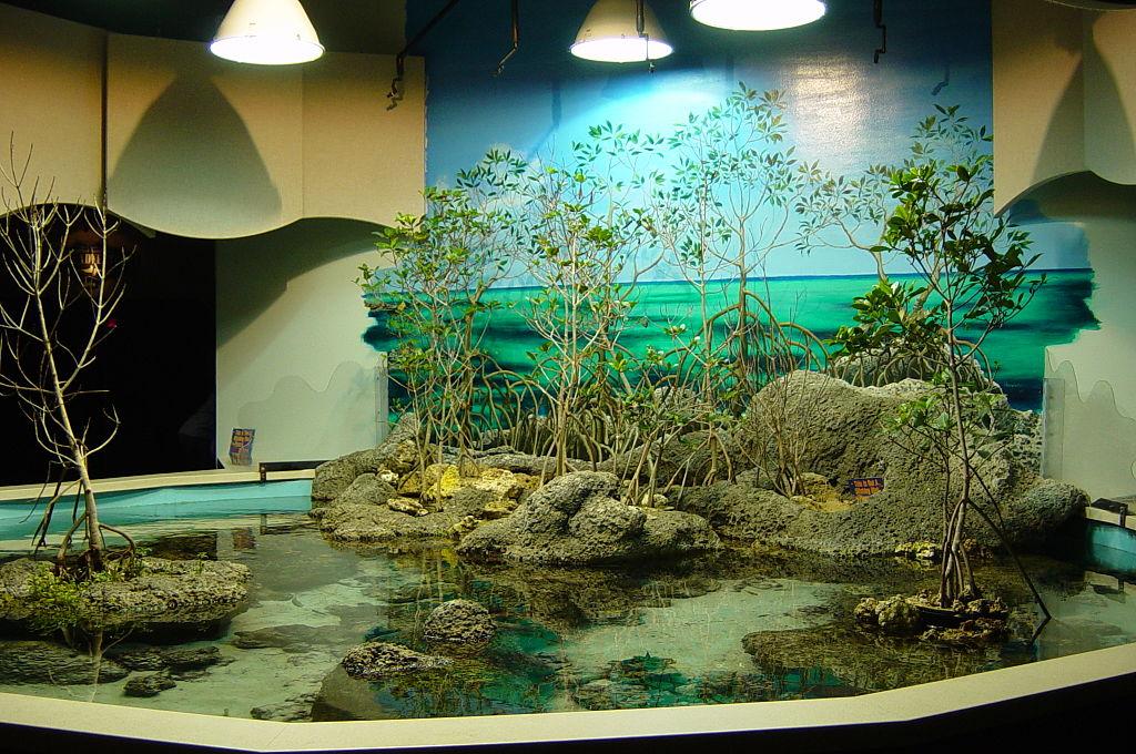 Image Result For Aquarium In Oklahoma