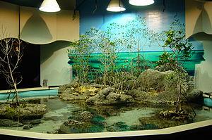 Oklahoma Aquarium - The mangrove environment near the Stingray Touch Tank.