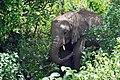 Manyara 2012 05 29 2204 (7482068564).jpg