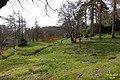 Massed daffodils (WGP) (32578533143).jpg