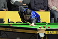 Matthew Stevens at Snooker German Masters (DerHexer) 2013-01-30 02.jpg