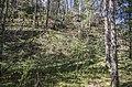 Mežs pie Braslas - panoramio.jpg