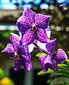 Miami - Fairchild Tropical Botanic Garden - in the Butterfly garden (12259858253).jpg