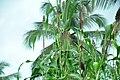 Millet In Kerala-4.jpg