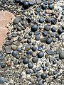 Moqui Marbles in GSENM.jpg