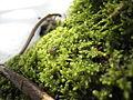Moss in snow.jpg