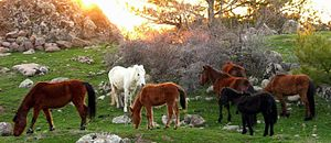 Yamanlar - Wild horses roaming in Mount Yamanlar