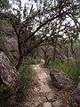 Mount Kuring-gai Trail - panoramio (3).jpg