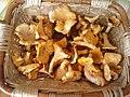 Mushrooms - Funghi (14563956840).jpg