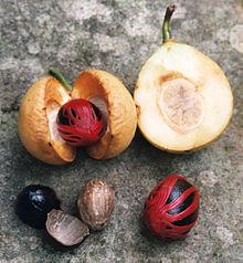 arbre noix de muscade