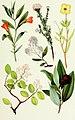 NIE 1905 California - shrubs.jpg