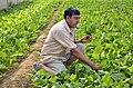 NP Himachal Pradesh 69 (6348260224).jpg