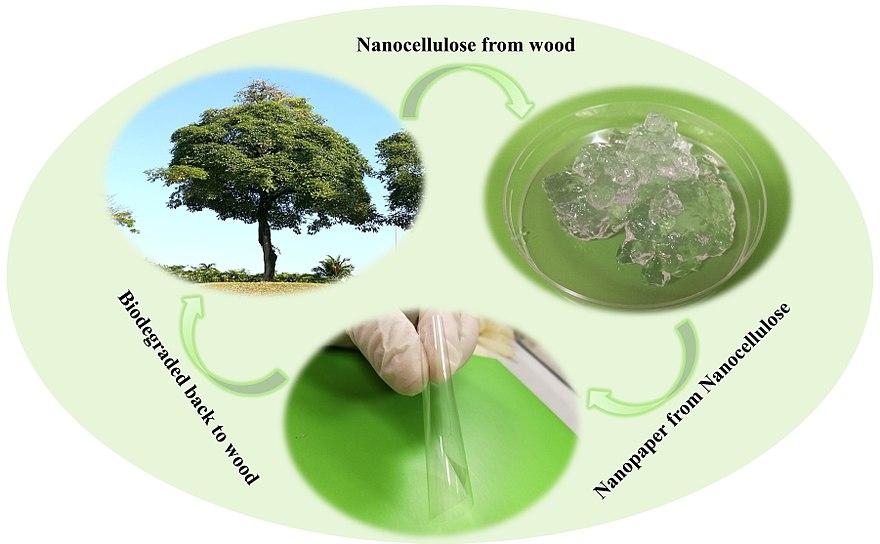 Nanocellulose - Wikiwand