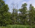 Nationaal Park De Alde Feanen. Locatie, It Wikelslân 021.JPG
