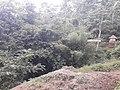 Nature20170629 123700.jpg
