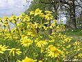 Naturpark Blumen A.JPG